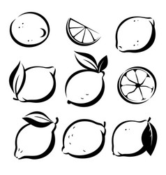 set of lemons and lime symbols in sketch style vector image vector image