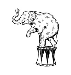 Circus elephant engraving vector