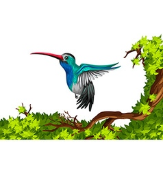 Humming bird flying on branch vector