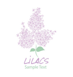 lilac flower logo design text hand drawn vector image