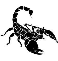Scorpion isolated on white background vector