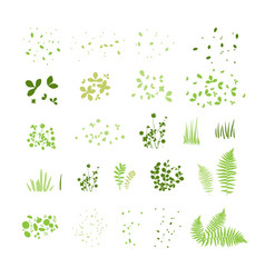 set silhouettes summer grass leaves vector image