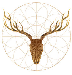sketch of deer skull for tattoo printing on vector image