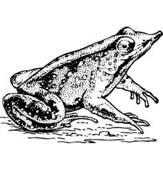 frog rhinodermatinae vector image vector image