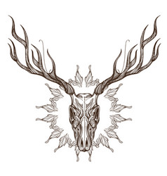 Sketch of deer skull with decorative floral vector
