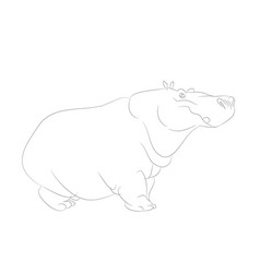 hippo is worth drawing lines vector image