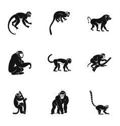 species of monkey icon set simple style vector image