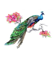 Watercolor drawing peacock on blooming tree branch vector image