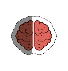 brain human isolated icon vector image