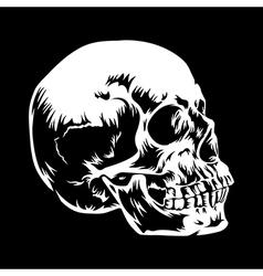 Skull 001 vector image vector image