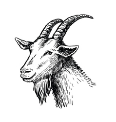 Head of goat vector