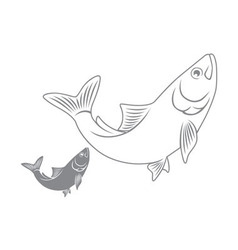 herring fish vector image