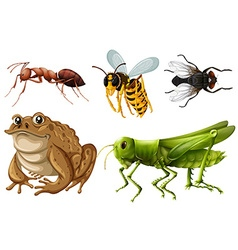 Set of different kinds of insects vector image