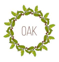 Wreath with aleppo oak branch vector