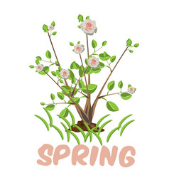 Blooming tree isolated vector