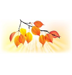 Autumn yellow leaves vector