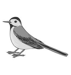 drawing wagtail vector image