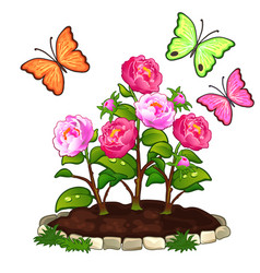 Flower bed of peonies in ground and butterflies vector
