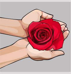 Hands gently holding a bud of a red rose vector