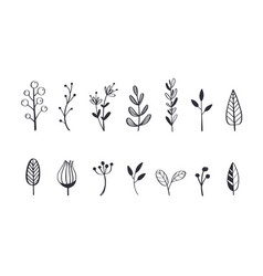 herbal tea and floral doodle set 5 vector image