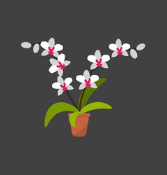 House plant white orchid in pot vector