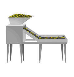 Conveyor belt with olives sorting as oil vector