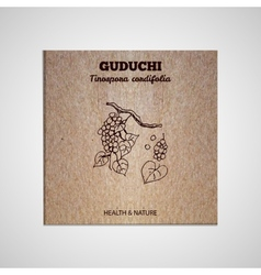 Herbs and spices collection - guduchi vector