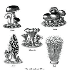 antique engraving top edible mushroom vector image