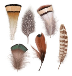 marvelous feather set vector image
