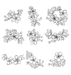 set of cherry blossoms collection of flowers of vector image