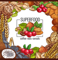 Superfood poster with nut cereal seed and bean vector