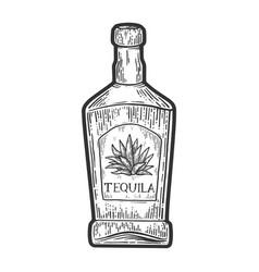 Tequila bottle sketch vector