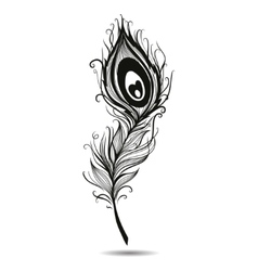 Peacock feather isolated black in background vector image