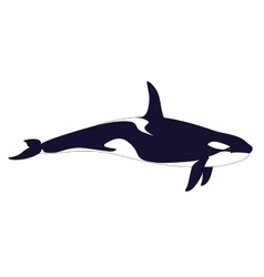Realistic Killer Whale on a white background vector image vector image