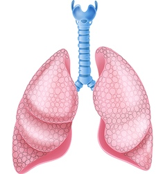 Cartoon of healthy Lungs Anatomy vector image
