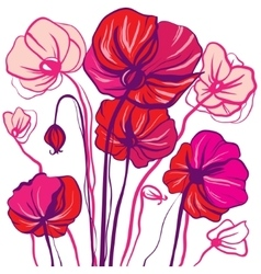 Drawing bright red and pink poppy flowers vector