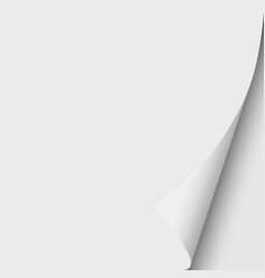 sheet white paper with curled lower right vector image