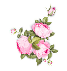 The blooming rose vector