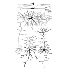 Variety of the cell bodies of neurons vintage vector