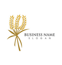 Agriculture wheat logo template vector