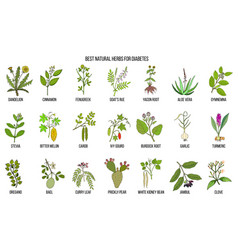 Herbs and spices that fight against diabetes vector
