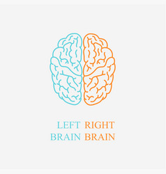 left and right brain on gray background vector image