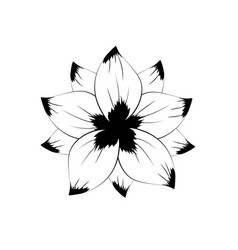 line rustic flower with natural petals vector image
