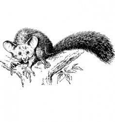 rodent daubentonia vector image