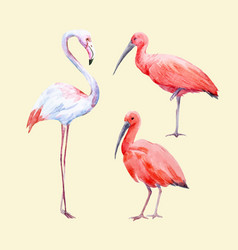 watercolor ibis and flamingo set vector image