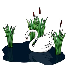 white swan on the dark lake vector image