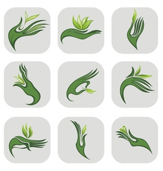 Hands with green leaf vector image
