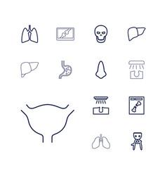 13 anatomy icons vector