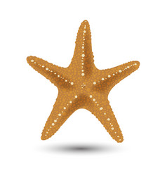 Badges stickers starfish in vector