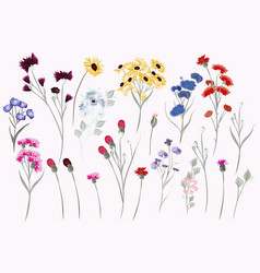 collection field wild flowers for design vector image